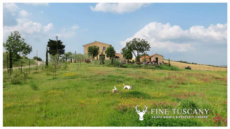 Character Property for sale in Lajatico Pisa Tuscany